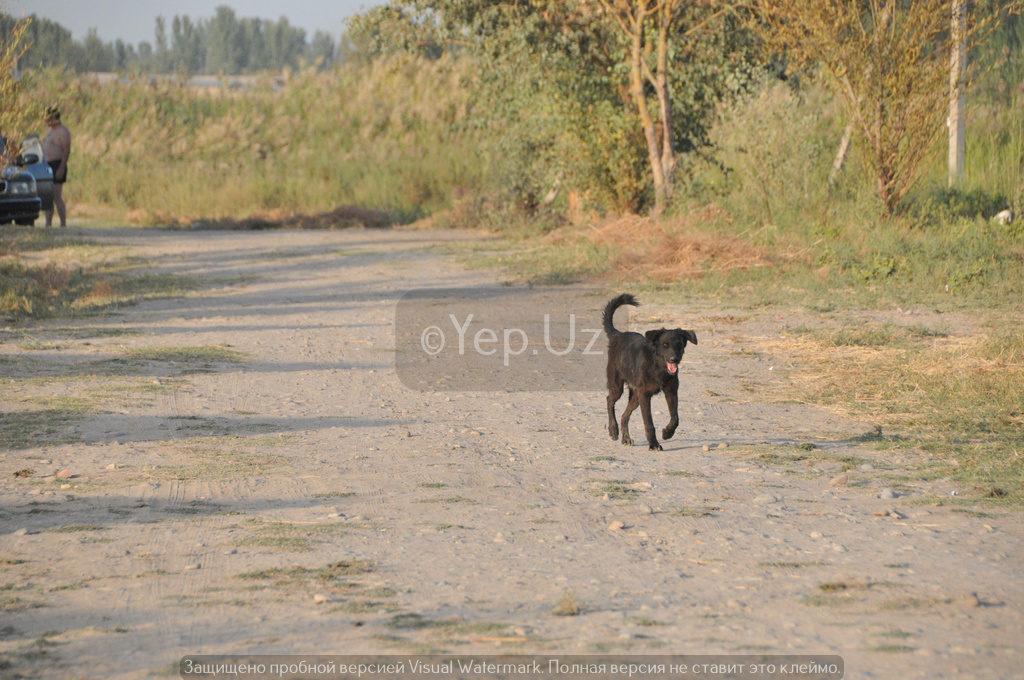 Отдыхающих почти нет, поэтому местная сторожевая собака проявляет к нам повышенный интерес