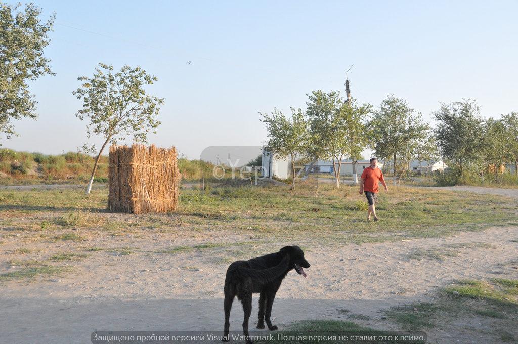 Раздевалка, Владимир и собака