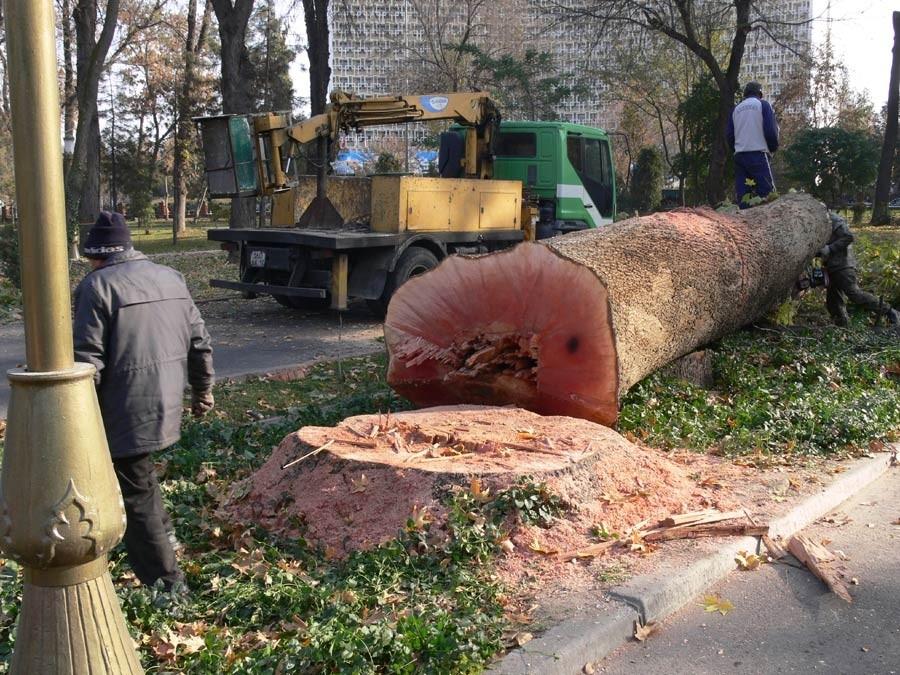 Вырубка Ташкентского сквера